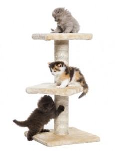 Aktiverade katter